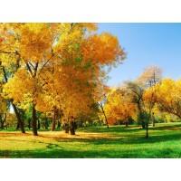 Осенний сезон на iBrema